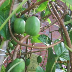 Ananasnaya